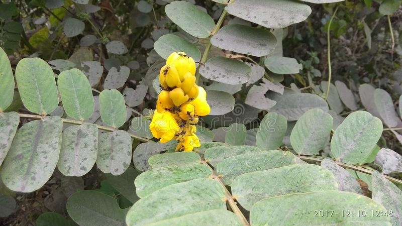 Flor com funcionamento do grupo das formigas fotografia de stock