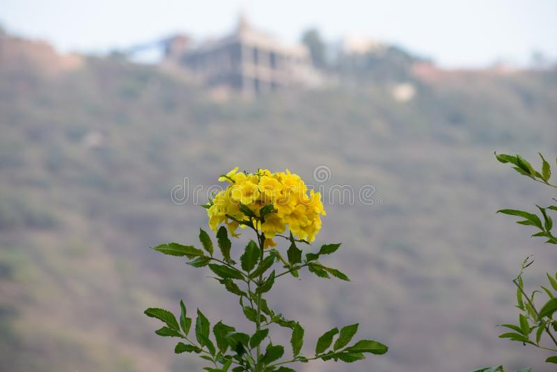 Flor com fundo do borrão foto de stock royalty free