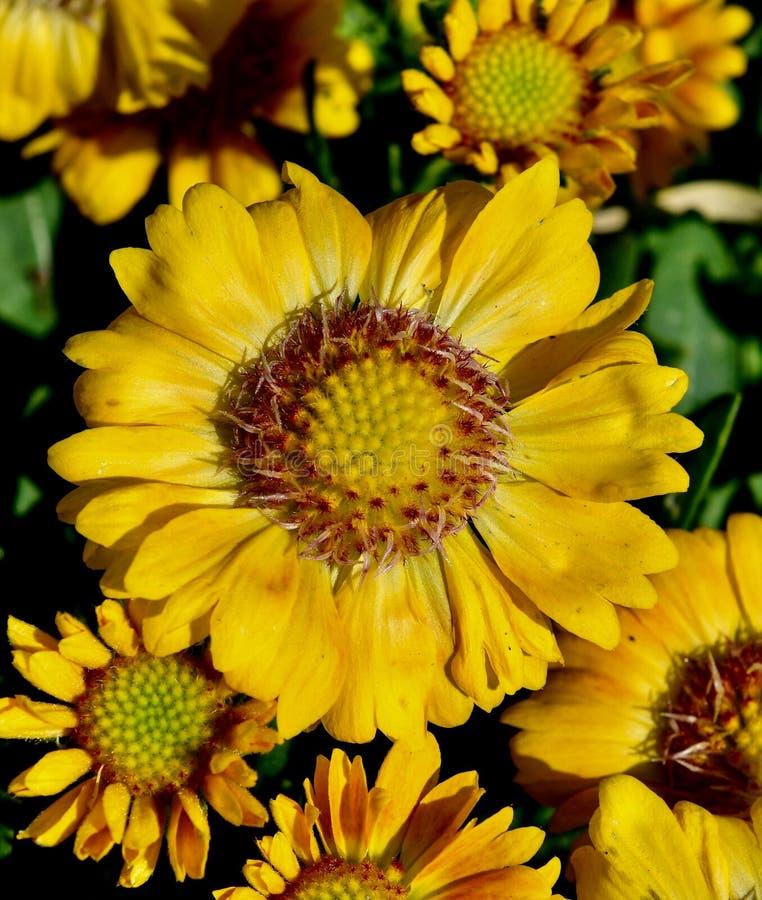 Flor combinada del melocotón fotos de archivo