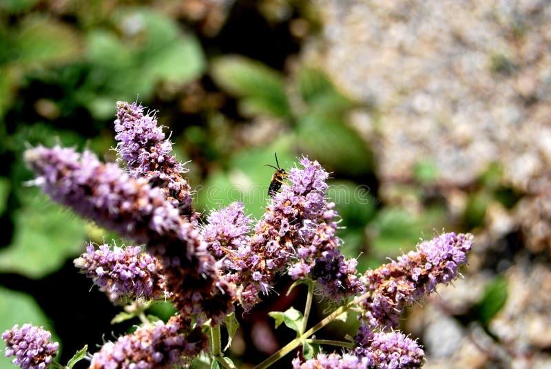 Flor con el insecto foto de archivo