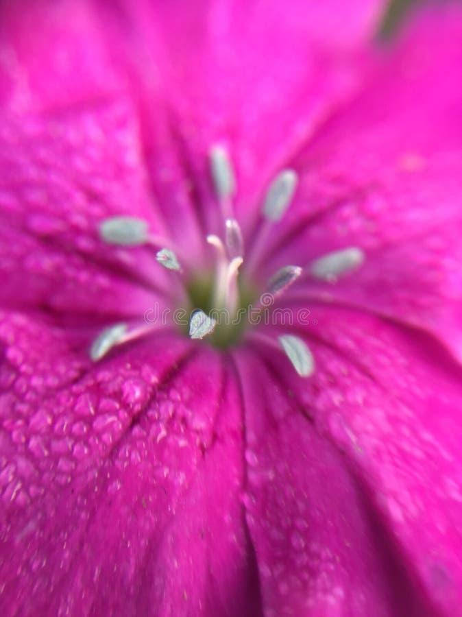 Flor con las gotitas foto de archivo libre de regalías