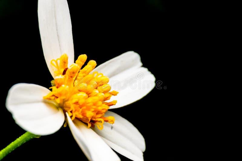 Flor con los pétalos fotos de archivo