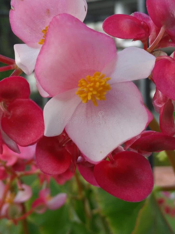 Flor con pálido - pétalos rosados fotos de archivo