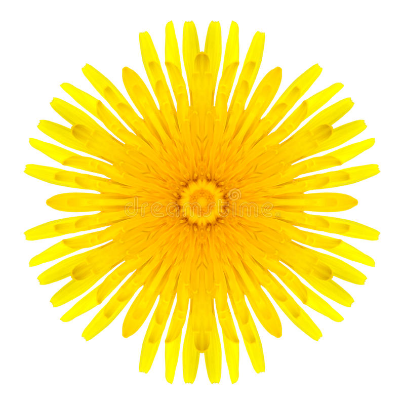 Flor concêntrica amarela do dente-de-leão isolada no branco. Mandala Design imagem de stock royalty free