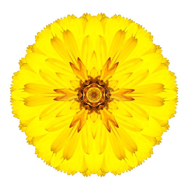 Flor concêntrica amarela do Gerbera isolada no branco. Mandala Design fotos de stock royalty free