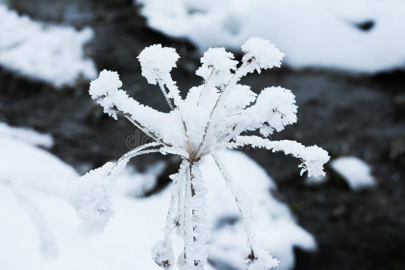 Flor congelada com um córrego pequeno atrás imagem de stock royalty free
