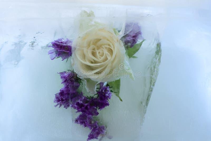 A flor congelada de aumentou imagens de stock royalty free