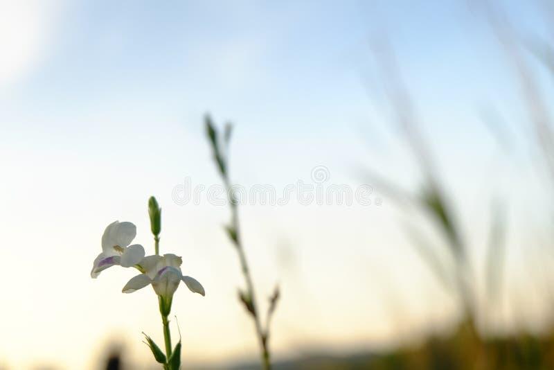 Flor contra el cielo de la puesta del sol fotografía de archivo
