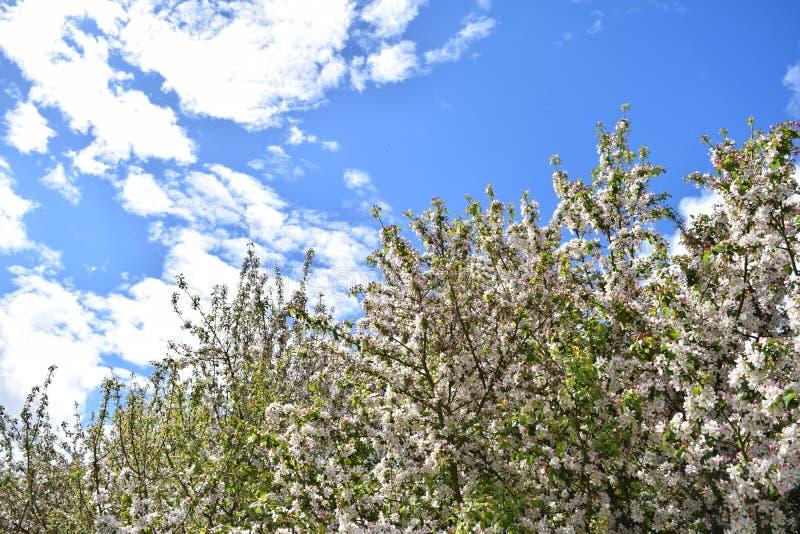 Flor contra o céu imagem de stock