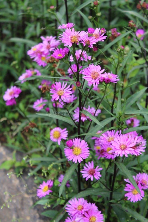 Flor cor-de-rosa agradável fotografia de stock royalty free