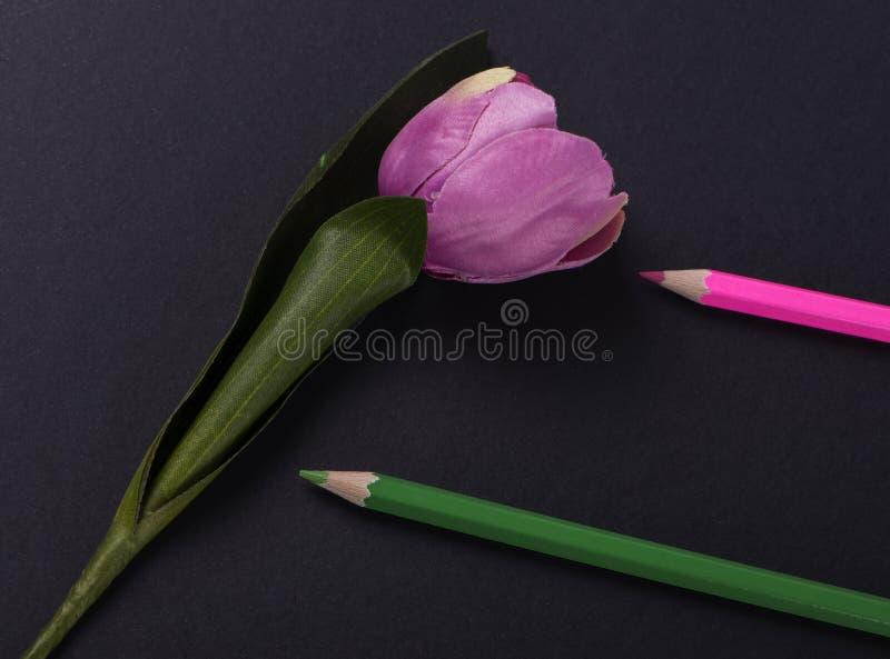 Flor cor-de-rosa ao lado de dois cor-de-rosa e lápis coloridos verdes no fundo preto imagens de stock royalty free