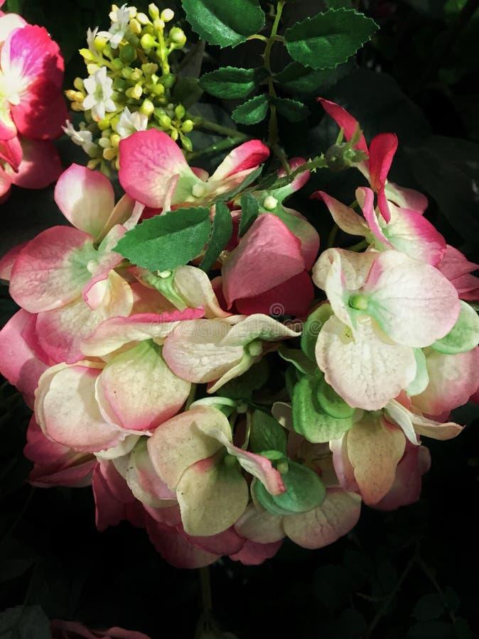 Flor cor-de-rosa bonita foto de stock royalty free