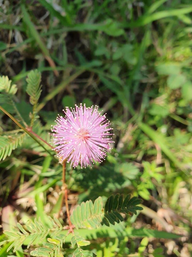 Flor cor-de-rosa bonita no prado imagens de stock royalty free