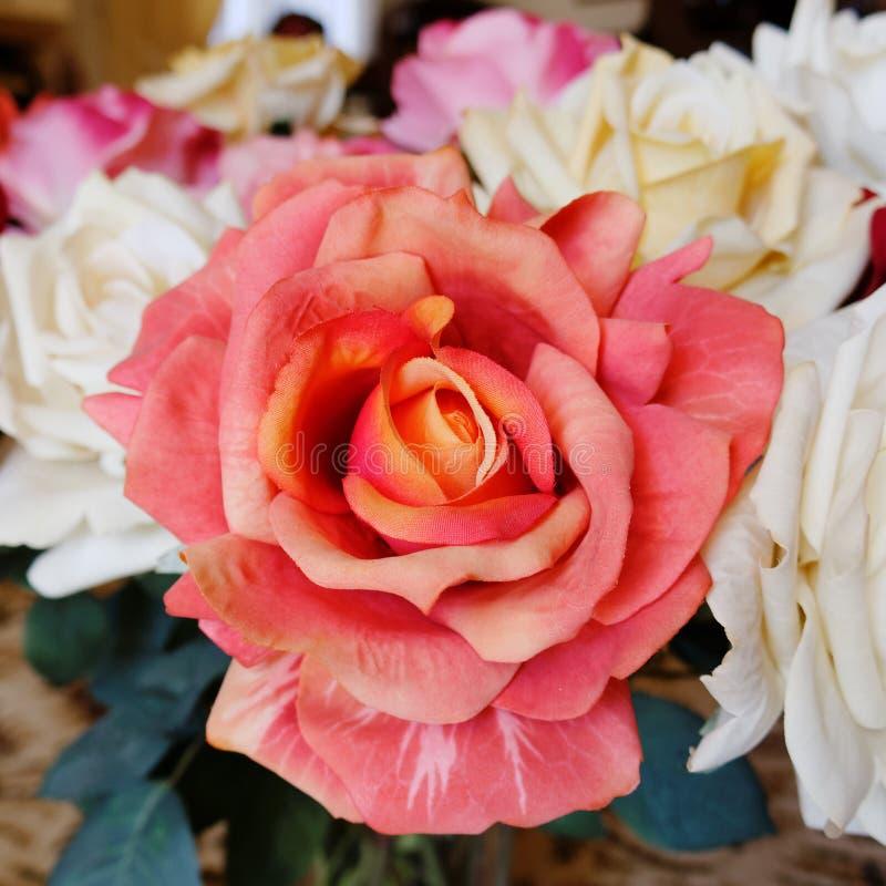 Flor cor-de-rosa da falsificação alaranjada fotos de stock royalty free