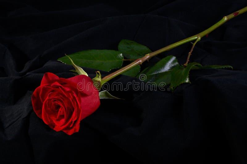 Flor cor-de-rosa da flor do vermelho no preto imagem de stock royalty free