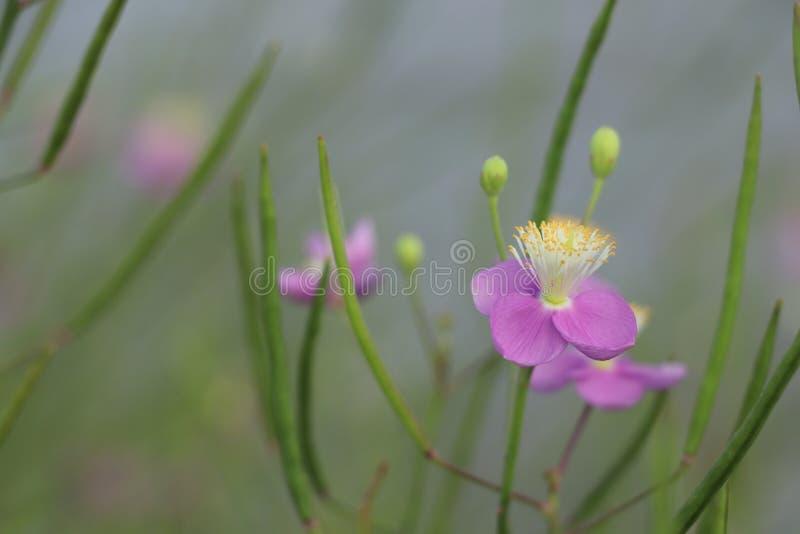 Flor cor-de-rosa da natureza foto de stock royalty free