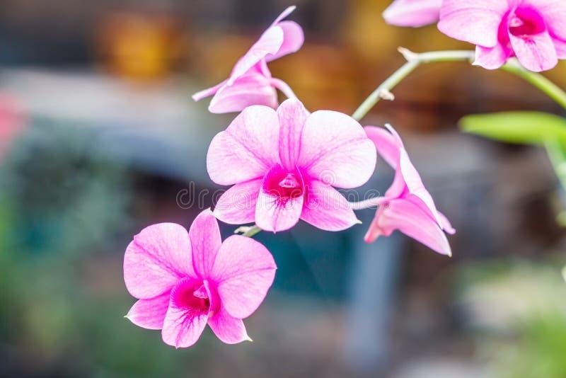 Flor cor-de-rosa da orquídea fotografia de stock
