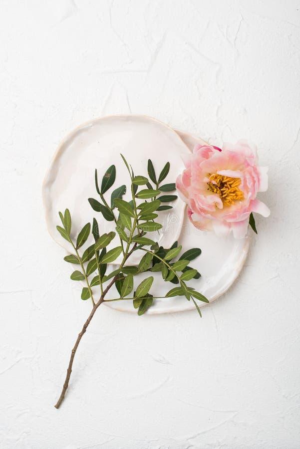 Flor cor-de-rosa da peônia no fundo textured branco imagem de stock