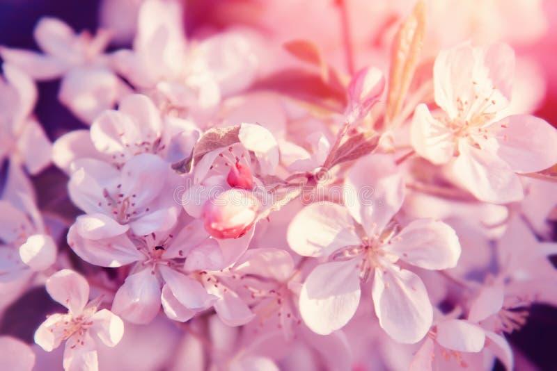 Flor cor-de-rosa das flores Fundo pastel floral bonito da natureza imagem de stock royalty free