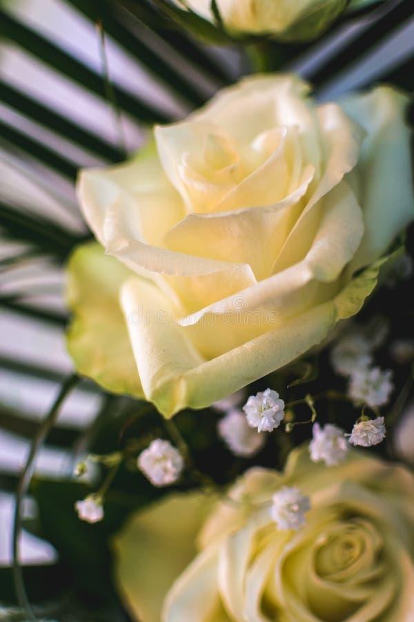 Flor cor-de-rosa do branco Sinal do amor Flor do jardim do verão imagem de stock