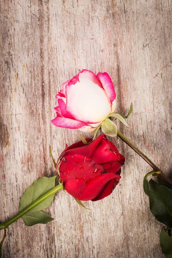Download Flor Cor-de-rosa Do Vermelho Imagem de Stock - Imagem de levantou, forma: 65580667