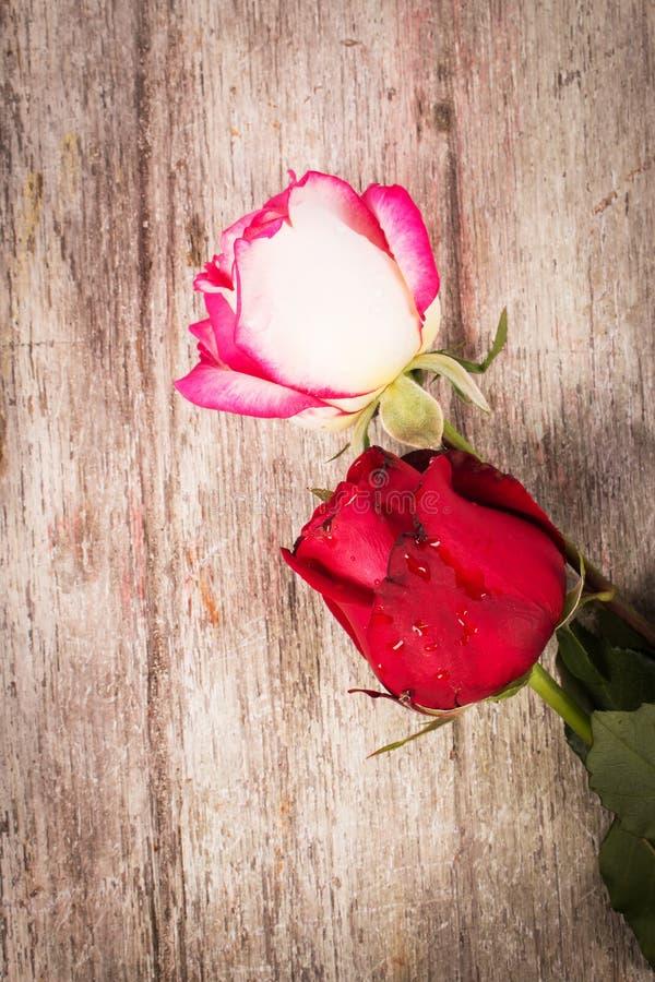 Download Flor Cor-de-rosa Do Vermelho Imagem de Stock - Imagem de flor, união: 65580695