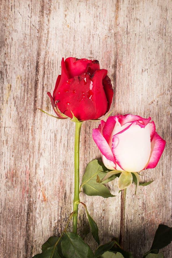 Download Flor Cor-de-rosa Do Vermelho Foto de Stock - Imagem de conceito, bonito: 65580700