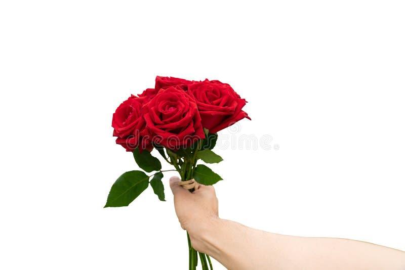 Flor cor-de-rosa do vermelho no fundo branco foto de stock royalty free