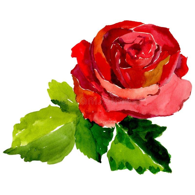 Flor cor-de-rosa do Wildflower em um estilo da aquarela isolada ilustração do vetor