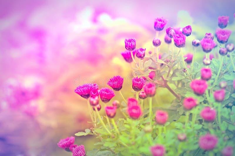 Flor cor-de-rosa - flor roxa imagem de stock royalty free