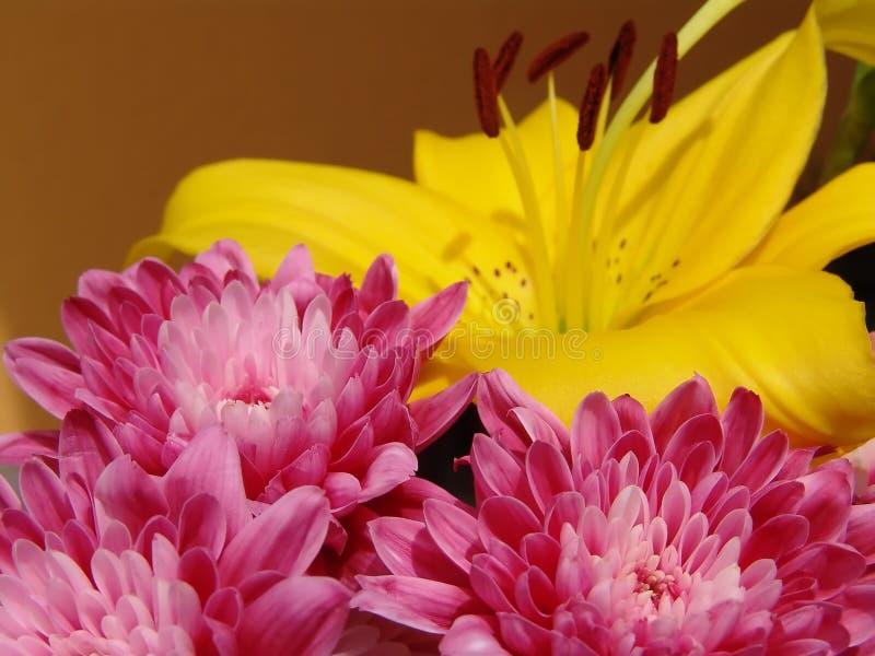 Flor cor-de-rosa - fundo amarelo fotografia de stock