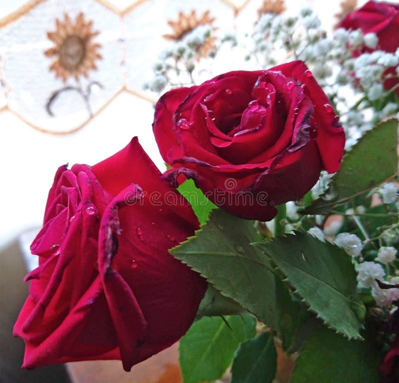Flor cor-de-rosa molhada murcho vermelha foto de stock
