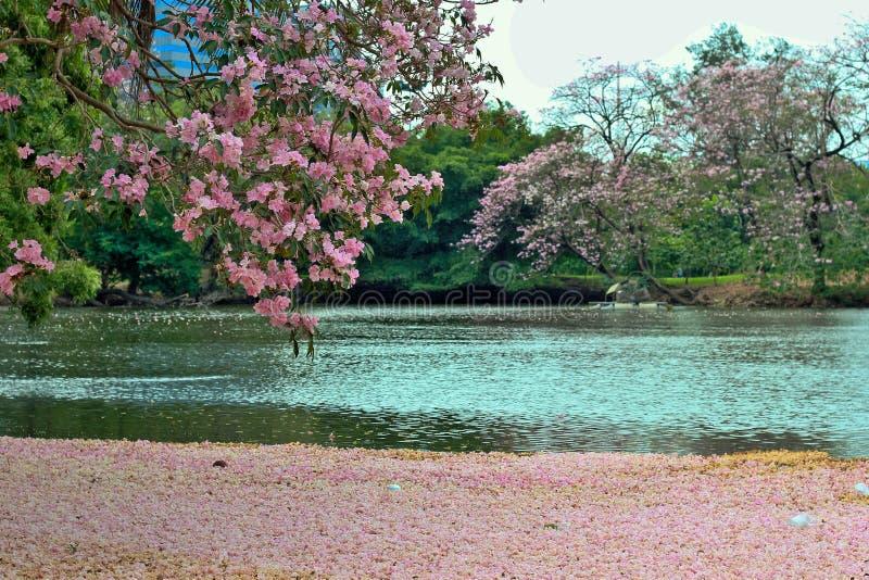 Flor cor-de-rosa na água fotos de stock