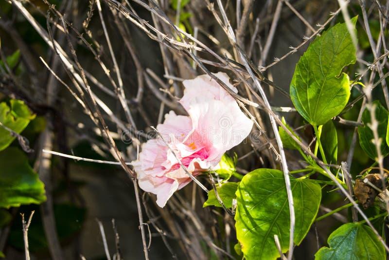 Flor cor-de-rosa nas madeiras imagem de stock