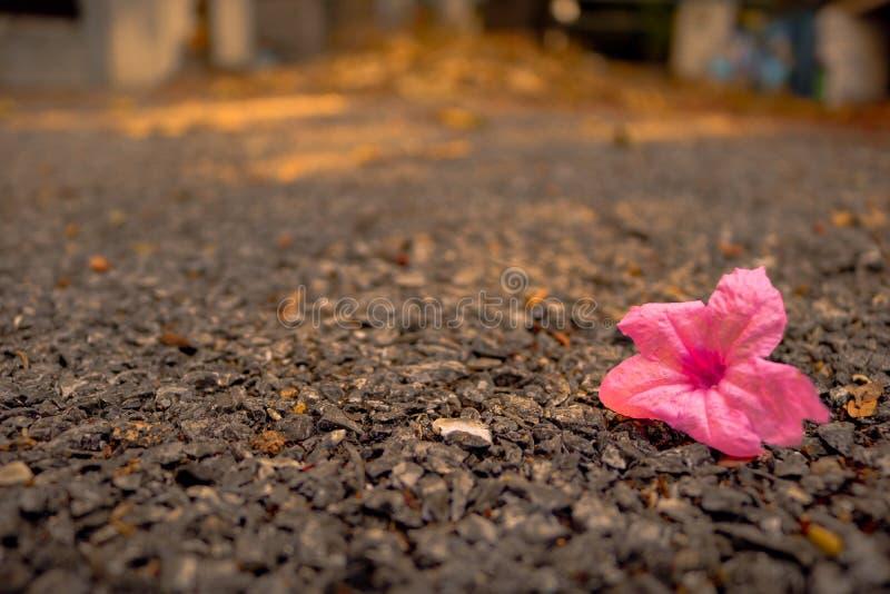 Flor cor-de-rosa no assoalho imagem de stock royalty free
