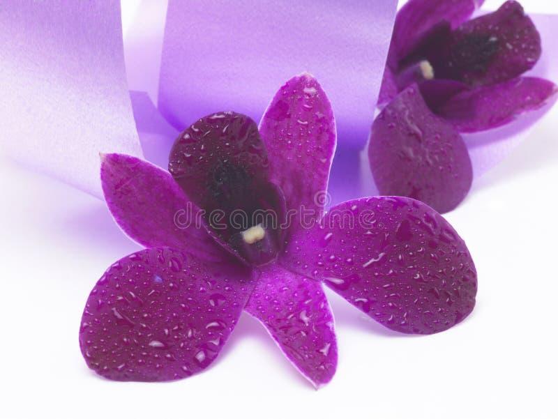 Flor cor-de-rosa no fundo violeta do cetim fotos de stock royalty free