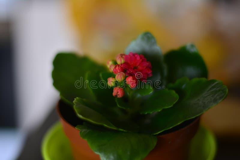 flor cor-de-rosa pequena na janela fotografia de stock royalty free