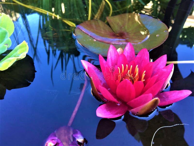 flor cor-de-rosa, tempo de mola imagem de stock royalty free