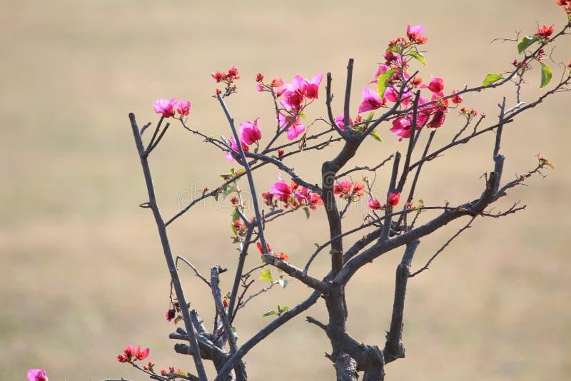 Flor cor-de-rosa vermelha fotos de stock royalty free