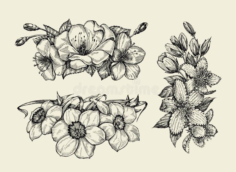Flor Dé el bosquejo exhausto tutsan, hypericum, narciso, flores de la cereza Ilustración del vector ilustración del vector