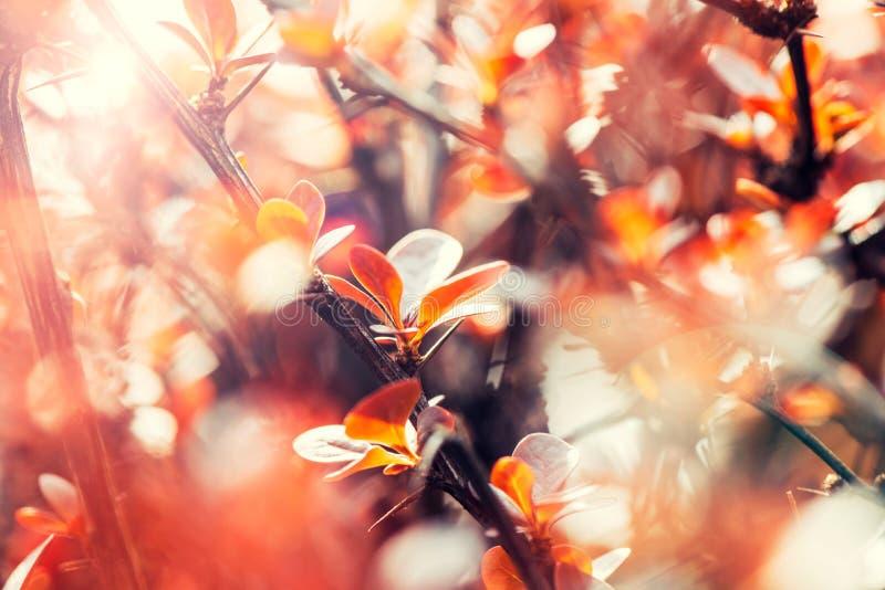 Flor da árvore alaranjada fotos de stock