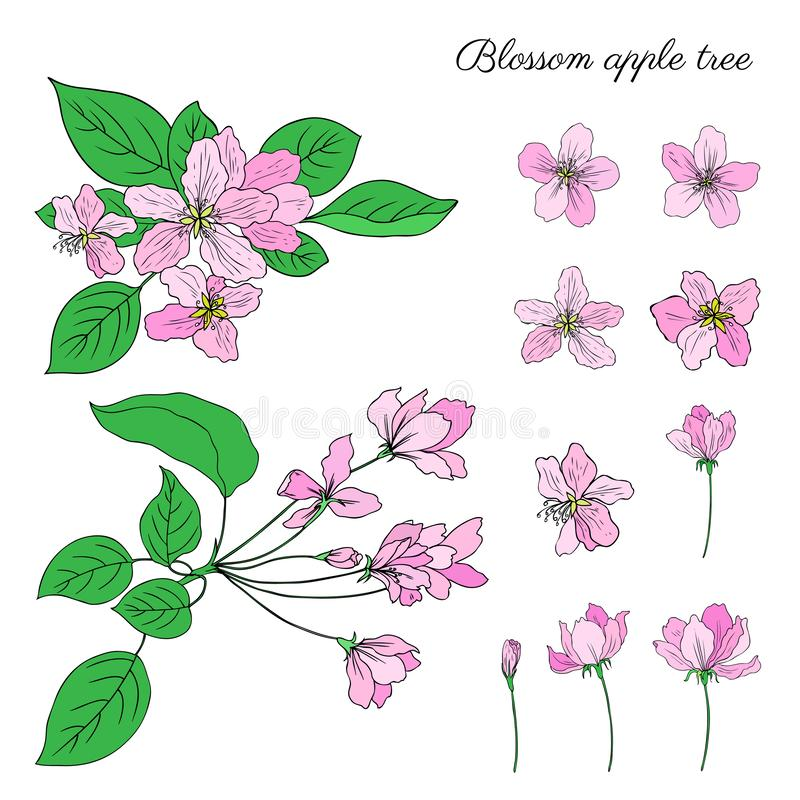 Flor da flor da árvore de Apple, botão, folhas, cabeça, mão colorida do esboço do vetor do ramo tirada isolada em branco, estilo  ilustração stock