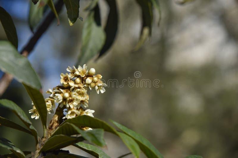 Download Flor da árvore do inverno imagem de stock. Imagem de árvore - 65577389