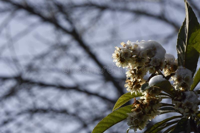 Download Flor da árvore do inverno foto de stock. Imagem de fundo - 65577526