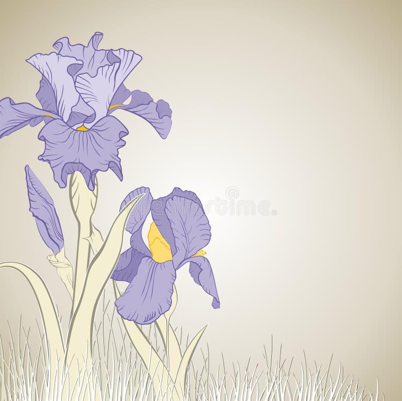 Flor da íris da mola ilustração do vetor