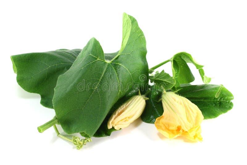 Flor da abóbora com folhas imagem de stock