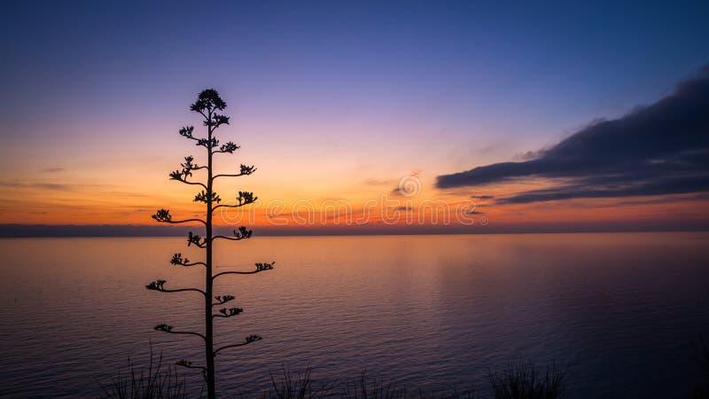 Flor da agave contra o por do sol bonito imagens de stock royalty free