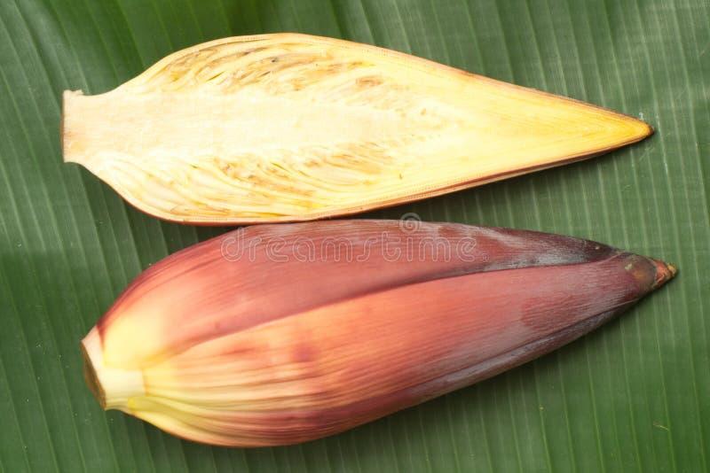 Download Flor da banana foto de stock. Imagem de starchy, botanic - 29840720