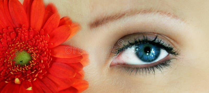 Flor da beleza fotos de stock royalty free