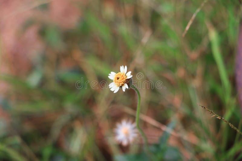 Flor da flor branca pequena na árvore foto de stock